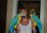 Blue And Gold Macaw Parrots For Adoption Please Contact